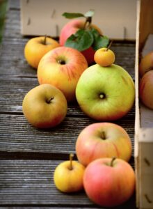 Selection of lots of different type of apples