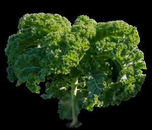 green kale leaves